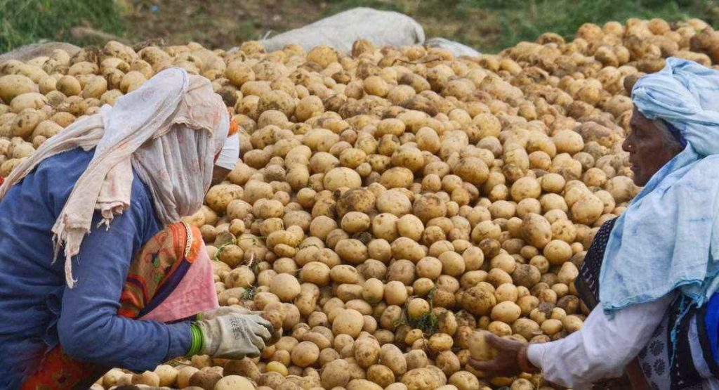 Deesa Potato Price Today Potato Price Today In Deesa APMC Deesa ડીસા આજના બજાર ભાવ Deesa potato market price today khedutbhai